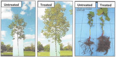 Arbor Green PRO Fertilization Treatment - Affordable Tree Care