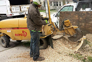 Affordable Tree Care - Stump Grinding Service